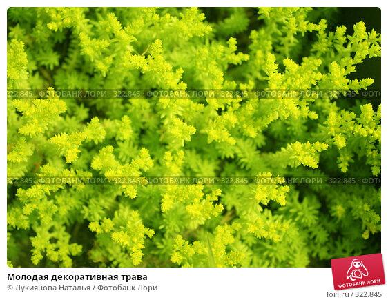 Молодая декоративная трава, фото № 322845, снято 10 июня 2008 г. (c) Лукиянова Наталья / Фотобанк Лори