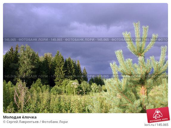 Молодая ёлочка, фото № 145065, снято 18 июля 2004 г. (c) Сергей Лаврентьев / Фотобанк Лори