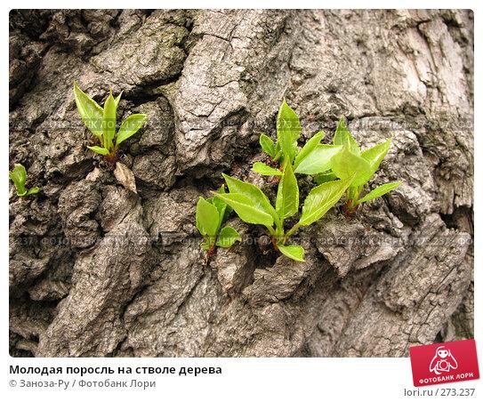 Молодая поросль на стволе дерева, фото № 273237, снято 1 мая 2008 г. (c) Заноза-Ру / Фотобанк Лори