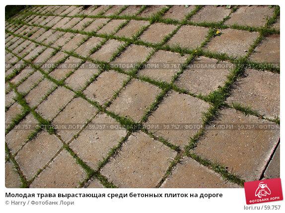 Молодая трава вырастающая среди бетонных плиток на дороге, фото № 59757, снято 23 июня 2005 г. (c) Harry / Фотобанк Лори