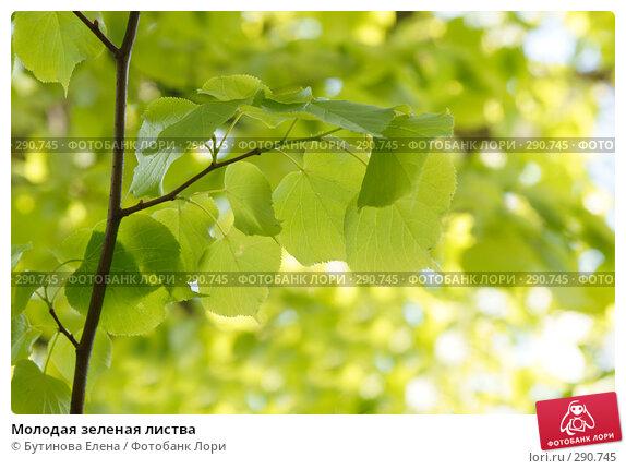 Молодая зеленая листва, фото № 290745, снято 17 мая 2008 г. (c) Бутинова Елена / Фотобанк Лори