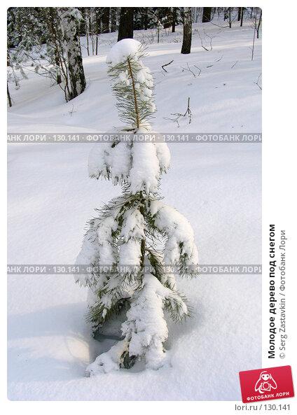 Молодое дерево под снегом, фото № 130141, снято 23 марта 2005 г. (c) Serg Zastavkin / Фотобанк Лори