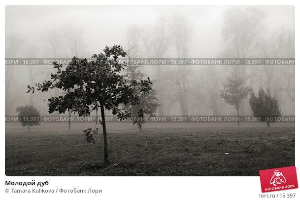 Молодой дуб, фото № 15397, снято 19 декабря 2006 г. (c) Tamara Kulikova / Фотобанк Лори