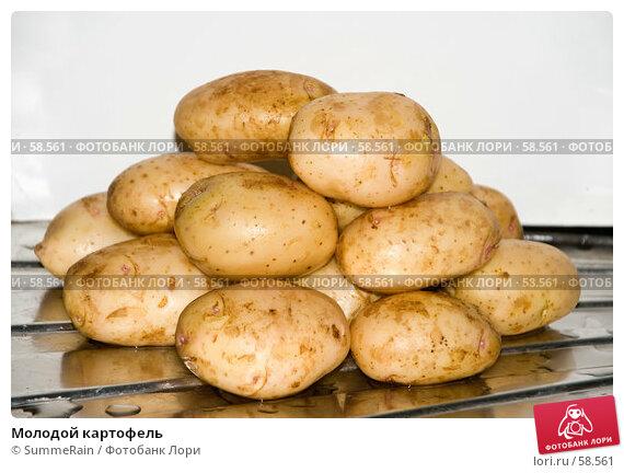 Купить «Молодой картофель», фото № 58561, снято 21 апреля 2018 г. (c) SummeRain / Фотобанк Лори