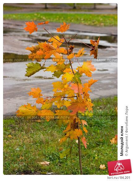 Молодой клен, фото № 84201, снято 18 октября 2006 г. (c) Argument / Фотобанк Лори