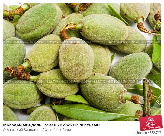 Молодой миндаль - зеленые орехи с листьями, фото № 332717, снято 19 мая 2007 г. (c) Анатолий Заводсков / Фотобанк Лори
