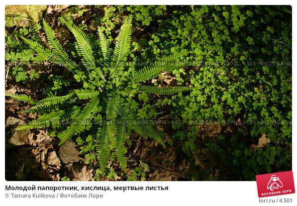 Купить «Молодой папоротник, кислица, мертвые листья», фото № 4501, снято 5 июня 2006 г. (c) Tamara Kulikova / Фотобанк Лори