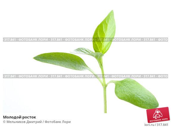 Купить «Молодой росток», фото № 317841, снято 28 мая 2008 г. (c) Мельников Дмитрий / Фотобанк Лори