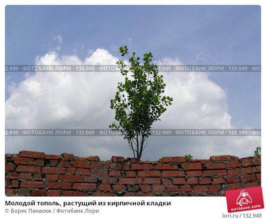 Молодой тополь, растущий из кирпичной кладки, фото № 132949, снято 5 июня 2004 г. (c) Борис Панасюк / Фотобанк Лори
