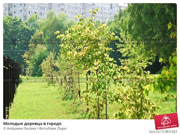 Купить «Молодые деревца в городе», эксклюзивное фото № 5963921, снято 16 августа 2011 г. (c) Алёшина Оксана / Фотобанк Лори