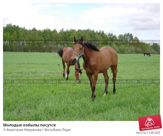 Молодые кобылы пасутся, фото № 135521, снято 22 мая 2006 г. (c) Анастасия Некрасова / Фотобанк Лори