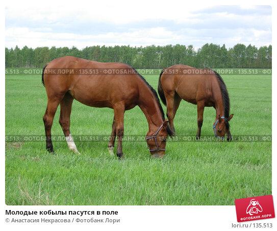 Купить «Молодые кобылы пасутся в поле», фото № 135513, снято 22 мая 2006 г. (c) Анастасия Некрасова / Фотобанк Лори