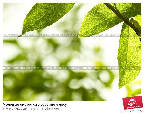 Молодые листочки в весеннем лесу, фото № 316765, снято 1 мая 2008 г. (c) Мельников Дмитрий / Фотобанк Лори