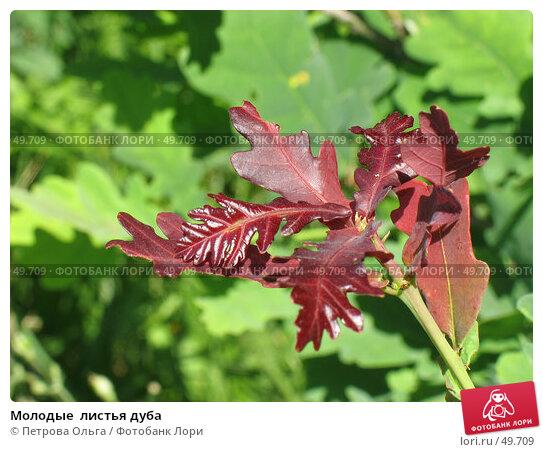 Молодые  листья дуба, фото № 49709, снято 3 июня 2007 г. (c) Петрова Ольга / Фотобанк Лори