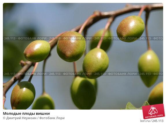 Молодые плоды вишни, эксклюзивное фото № 245113, снято 12 мая 2005 г. (c) Дмитрий Неумоин / Фотобанк Лори