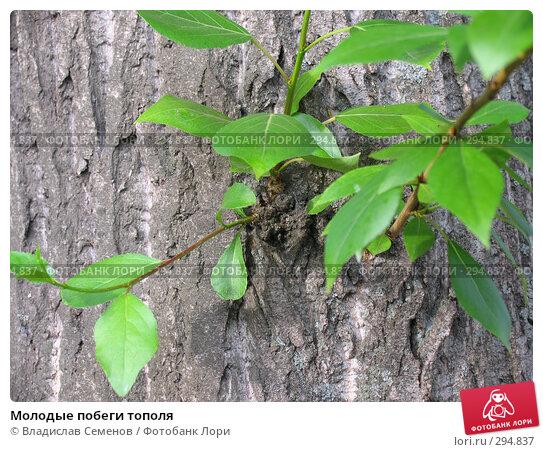 Молодые побеги тополя, фото № 294837, снято 21 мая 2008 г. (c) Владислав Семенов / Фотобанк Лори