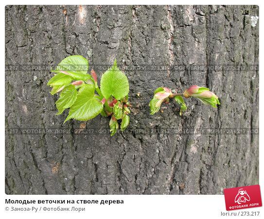 Молодые веточки на стволе дерева, фото № 273217, снято 1 мая 2008 г. (c) Заноза-Ру / Фотобанк Лори