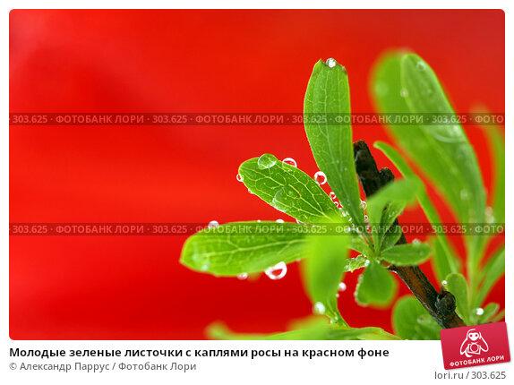 Молодые зеленые листочки с каплями росы на красном фоне, фото № 303625, снято 21 апреля 2008 г. (c) Александр Паррус / Фотобанк Лори