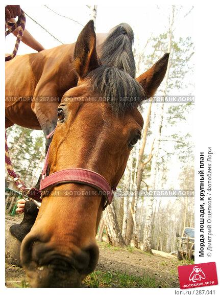 Морда лошади, крупный план, фото № 287041, снято 9 мая 2008 г. (c) Дмитрий Ощепков / Фотобанк Лори