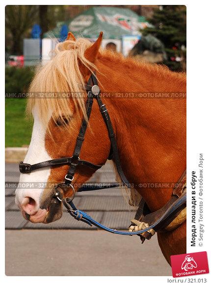 Купить «Морда лошади в сбруе», фото № 321013, снято 12 апреля 2008 г. (c) Sergey Toronto / Фотобанк Лори