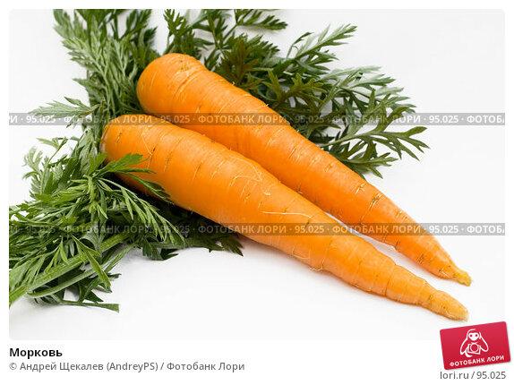 Морковь, фото № 95025, снято 6 августа 2006 г. (c) Андрей Щекалев (AndreyPS) / Фотобанк Лори
