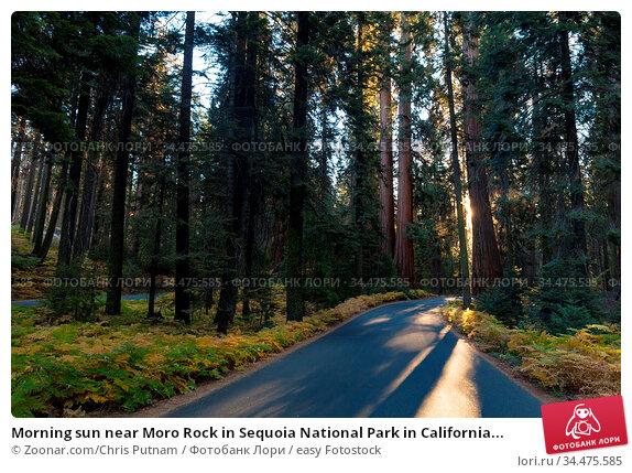 Morning sun near Moro Rock in Sequoia National Park in California... Стоковое фото, фотограф Zoonar.com/Chris Putnam / easy Fotostock / Фотобанк Лори