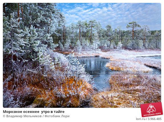 Купить «Морозное осеннее  утро в тайге», фото № 3966485, снято 13 октября 2012 г. (c) Владимир Мельников / Фотобанк Лори