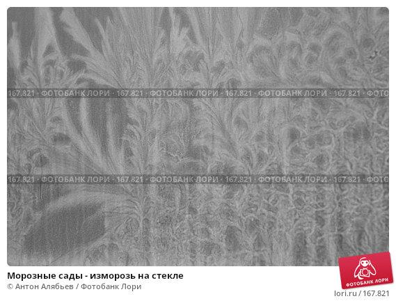 Морозные сады - изморозь на стекле, фото № 167821, снято 6 января 2008 г. (c) Антон Алябьев / Фотобанк Лори