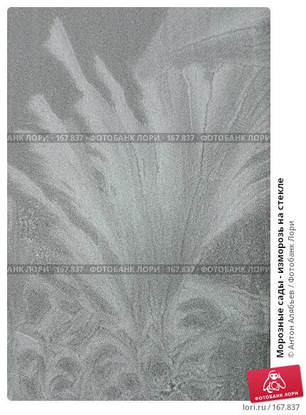 Морозные сады - изморозь на стекле, фото № 167837, снято 6 января 2008 г. (c) Антон Алябьев / Фотобанк Лори