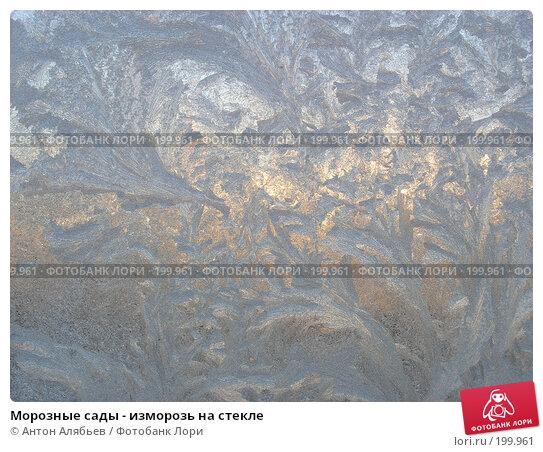 Морозные сады - изморозь на стекле, фото № 199961, снято 3 января 2008 г. (c) Антон Алябьев / Фотобанк Лори