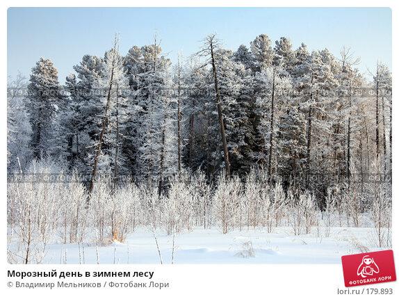 Морозный день в зимнем лесу, фото № 179893, снято 16 января 2008 г. (c) Владимир Мельников / Фотобанк Лори
