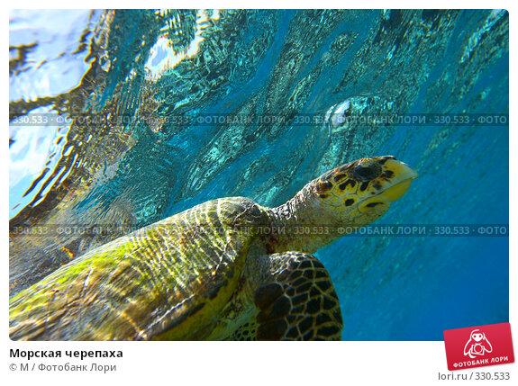 Морская черепаха, фото № 330533, снято 30 апреля 2017 г. (c) Михаил / Фотобанк Лори