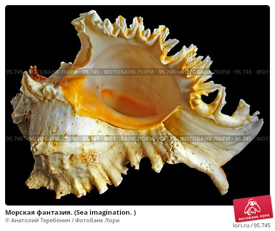 Морская фантазия. (Sea imagination. ), фото № 95745, снято 6 октября 2007 г. (c) Анатолий Теребенин / Фотобанк Лори
