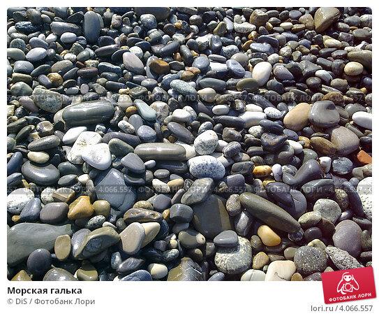 Купить «Морская галька», фото № 4066557, снято 28 января 2010 г. (c) DiS / Фотобанк Лори