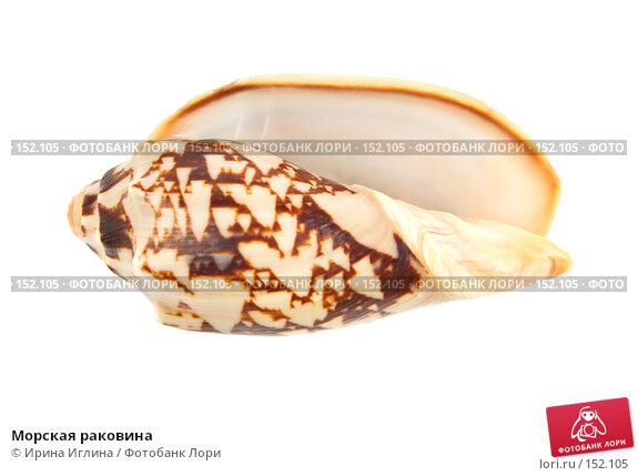 Морская раковина, фото № 152105, снято 17 декабря 2007 г. (c) Ирина Иглина / Фотобанк Лори