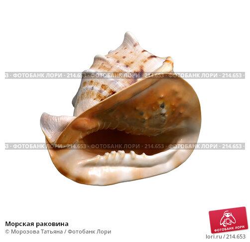 Купить «Морская раковина», фото № 214653, снято 22 января 2008 г. (c) Морозова Татьяна / Фотобанк Лори