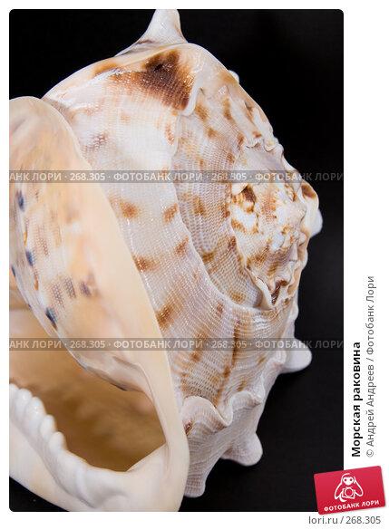Морская раковина, фото № 268305, снято 22 апреля 2008 г. (c) Андрей Андреев / Фотобанк Лори