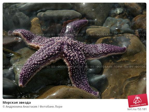 Морская звезда, фото № 53181, снято 16 сентября 2005 г. (c) Андрюхина Анастасия / Фотобанк Лори