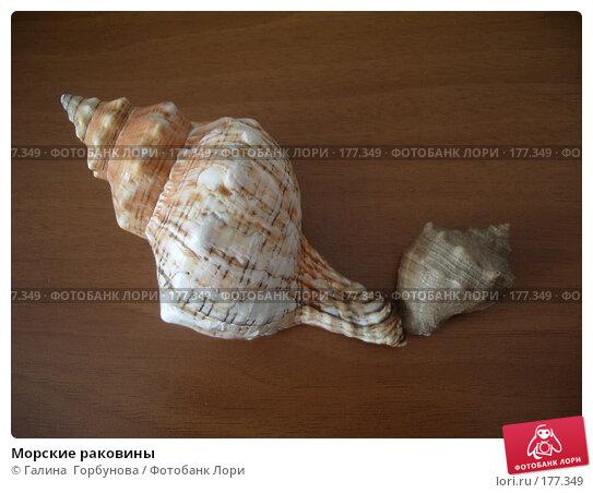 Морские раковины, фото № 177349, снято 27 августа 2006 г. (c) Галина  Горбунова / Фотобанк Лори