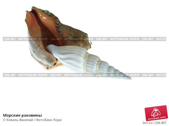 Купить «Морские раковины», фото № 236401, снято 18 марта 2018 г. (c) Коваль Василий / Фотобанк Лори