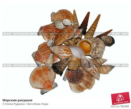 Морские ракушки, фото № 58849, снято 28 июня 2007 г. (c) Елена Руденко / Фотобанк Лори