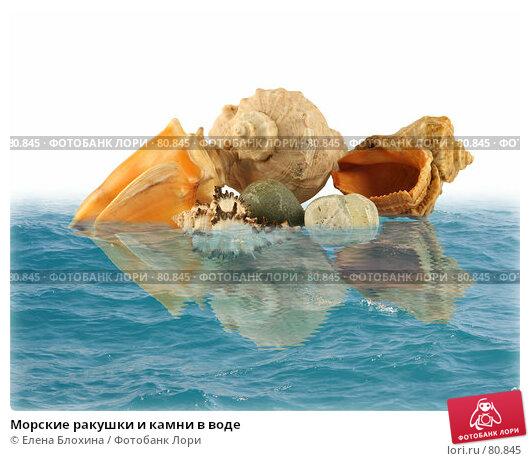 Морские ракушки и камни в воде, фото № 80845, снято 22 июля 2017 г. (c) Елена Блохина / Фотобанк Лори