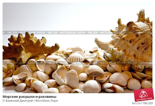 Морские ракушки и раковины, фото № 186329, снято 24 января 2008 г. (c) Баевский Дмитрий / Фотобанк Лори