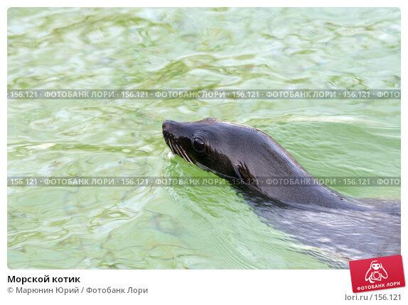 Купить «Морской котик», фото № 156121, снято 10 декабря 2007 г. (c) Марюнин Юрий / Фотобанк Лори