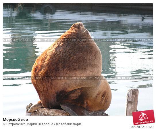 Морской лев, фото № 216129, снято 27 февраля 2008 г. (c) Петроченко Мария Петровна / Фотобанк Лори