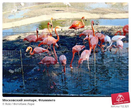 Московский зоопарк. Фламинго, фото № 12321, снято 24 сентября 2006 г. (c) Roki / Фотобанк Лори