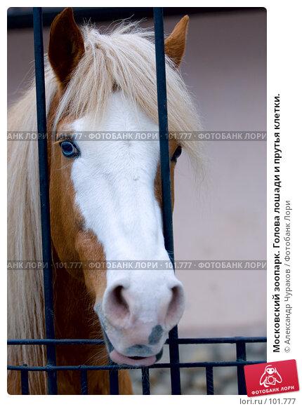 Московский зоопарк. Голова лошади и прутья клетки., фото № 101777, снято 1 января 2007 г. (c) Александр Чураков / Фотобанк Лори