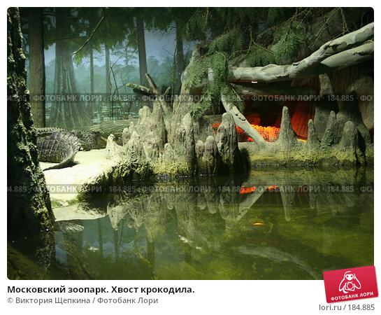 Московский зоопарк. Хвост крокодила., фото № 184885, снято 19 сентября 2007 г. (c) Виктория Щепкина / Фотобанк Лори