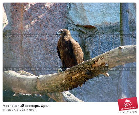 Московский зоопарк. Орел, фото № 12309, снято 24 сентября 2006 г. (c) Roki / Фотобанк Лори