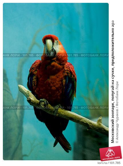 Московский зоопарк, попугай на сучке, предположительно ара, фото № 101785, снято 1 января 2007 г. (c) Александр Чураков / Фотобанк Лори
